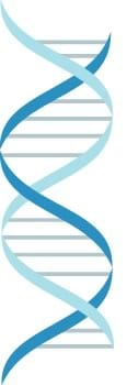 icon of a strand of DNA